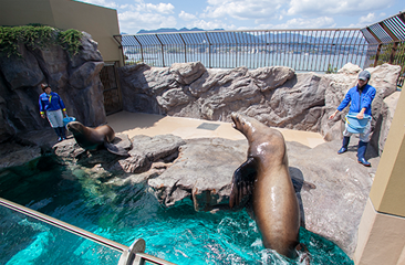 Sea Lion Pool(2F)